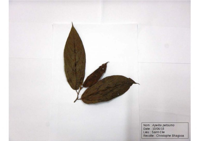 Herbier_Page_02