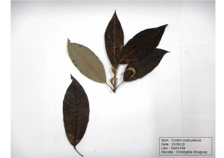 Herbier_Page_05