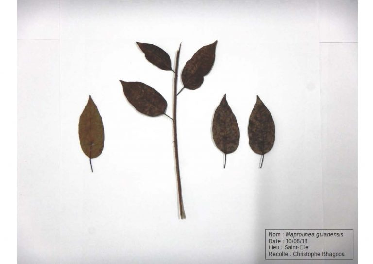 Herbier_Page_08